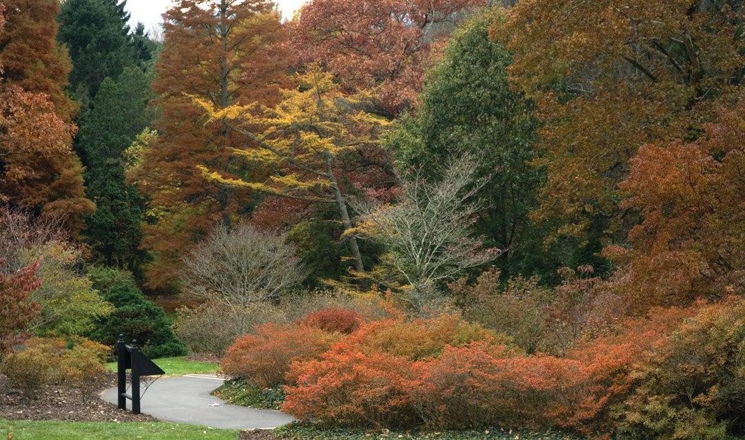 Preparing Biltmore's historic gardens for fall