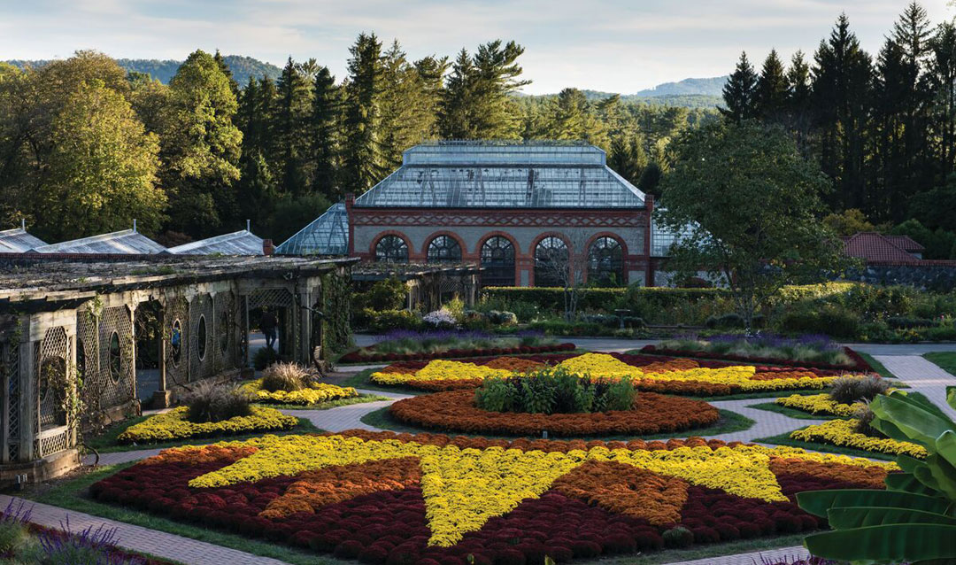 Fall mums in the Walled Garden at Biltmore