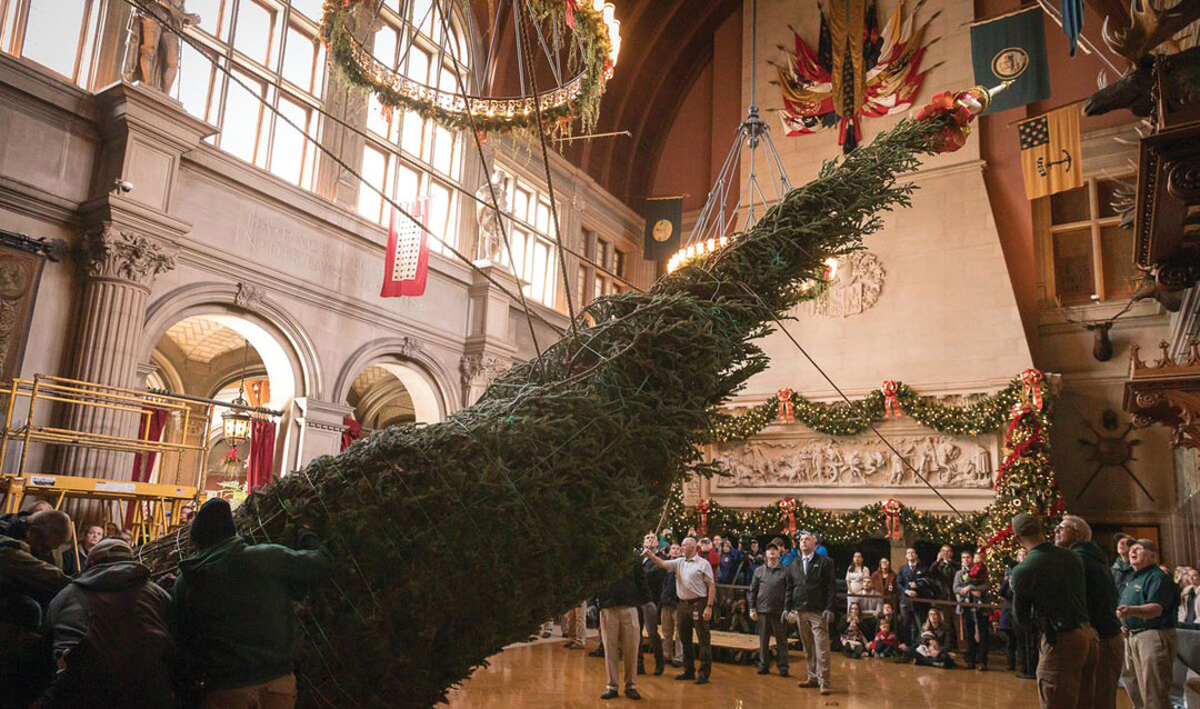 Raising the Banquet Hall tree is a Christmas tradition at Biltmore