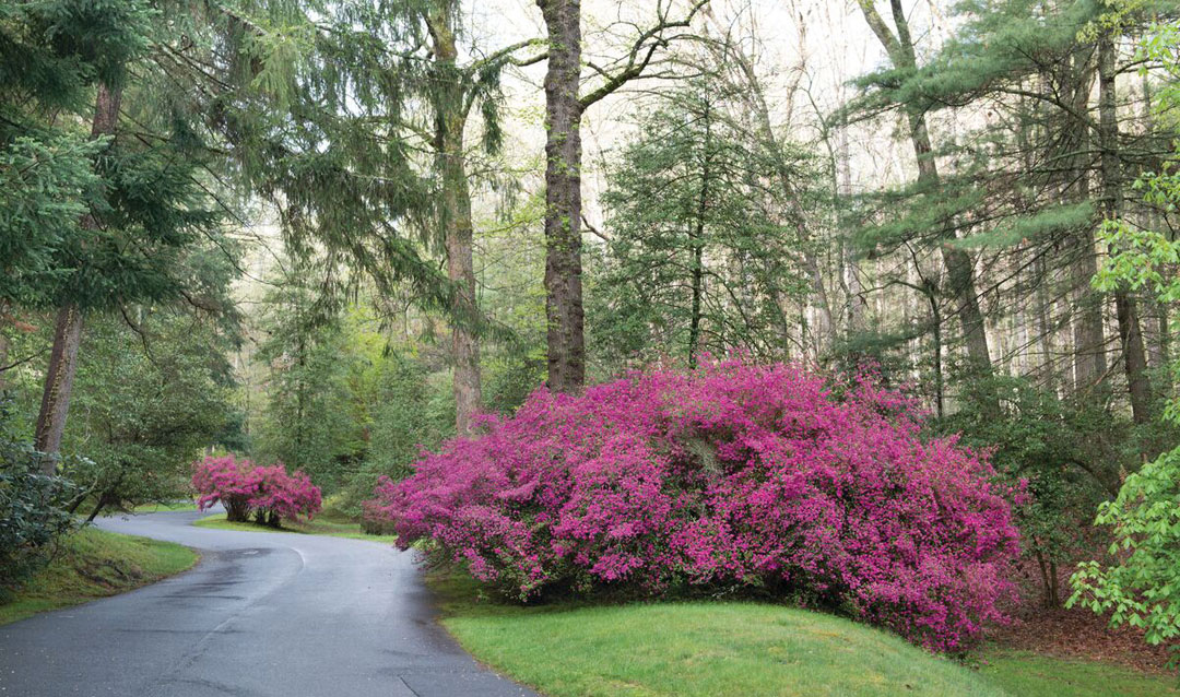 Biltmore's Approach Road in spring