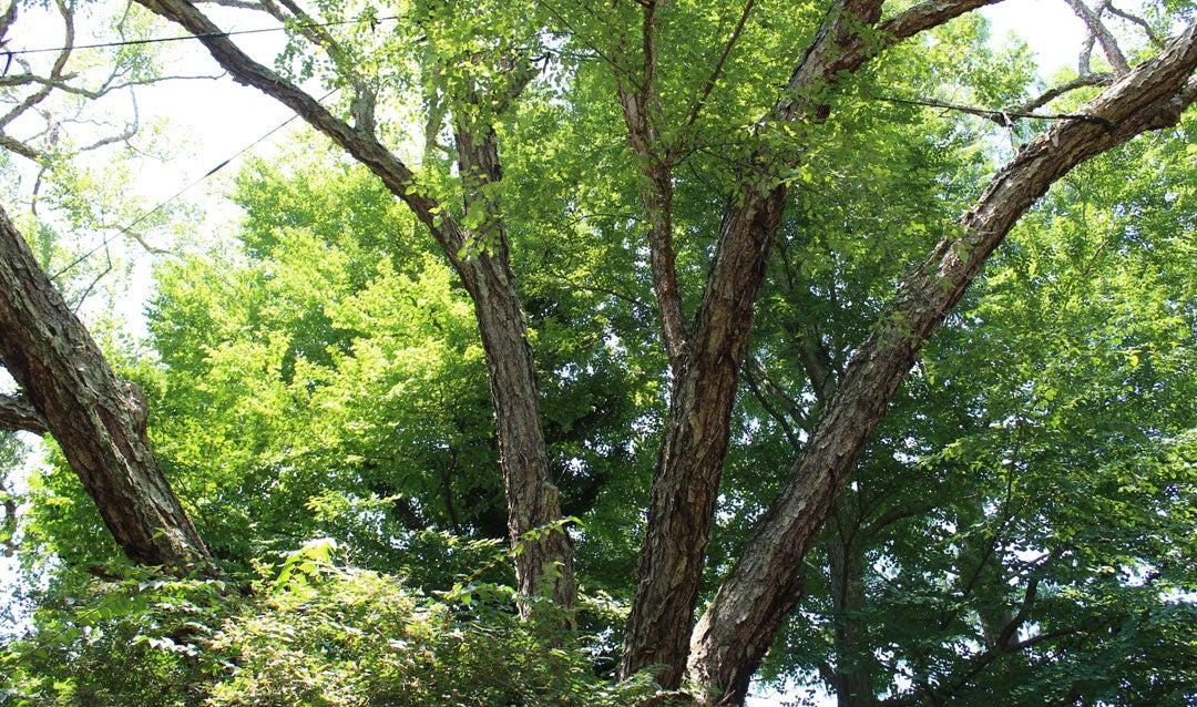 Discover Biltmore's distinctive Shrub Garden