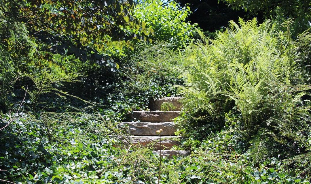 Stone steps in Biltmore's Shrub Garden