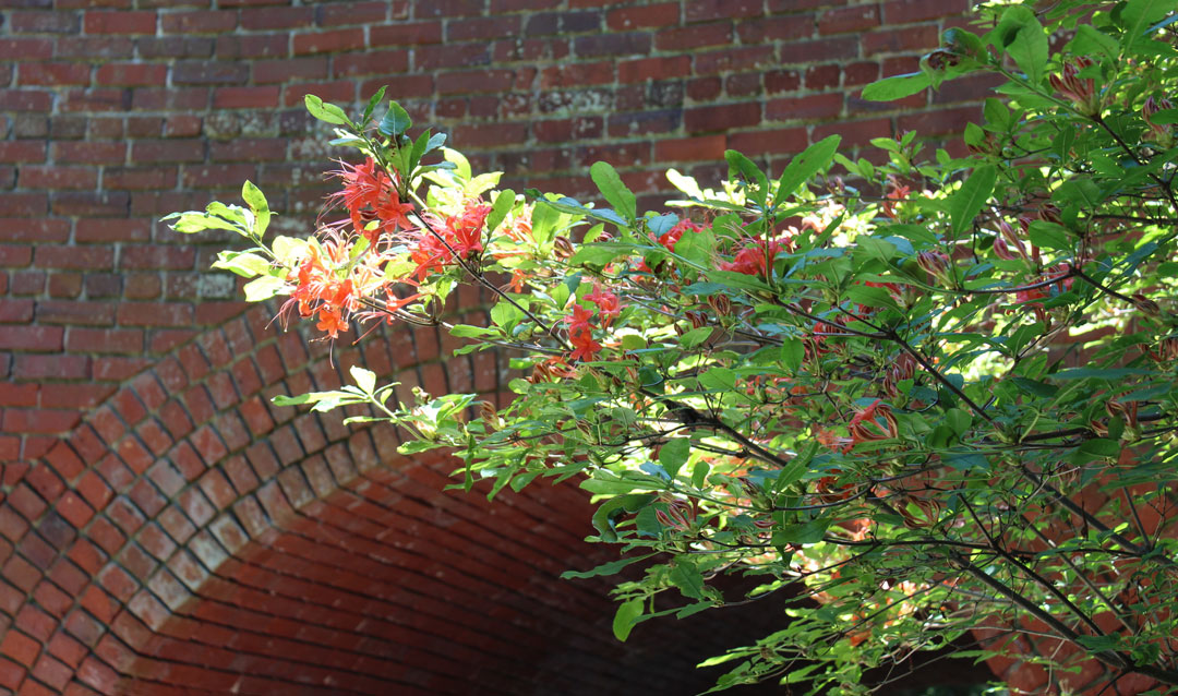 Colorful summer blooms against the brick tunnel bridge in the Shrub Garden