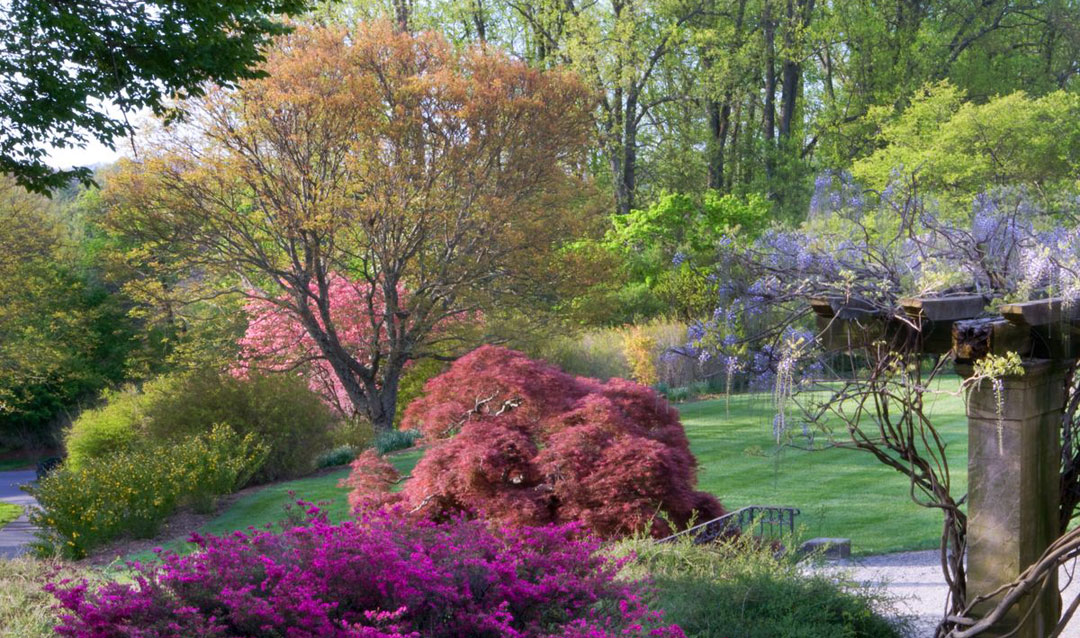 Olmsted planned colorful blooms for spring in Biltmore's Shrub Garden