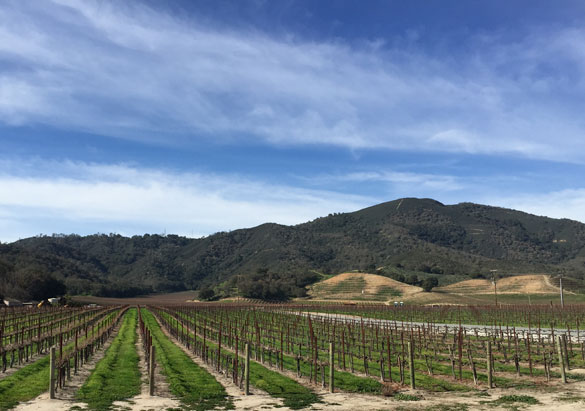 View of one of our partner vineyards in California