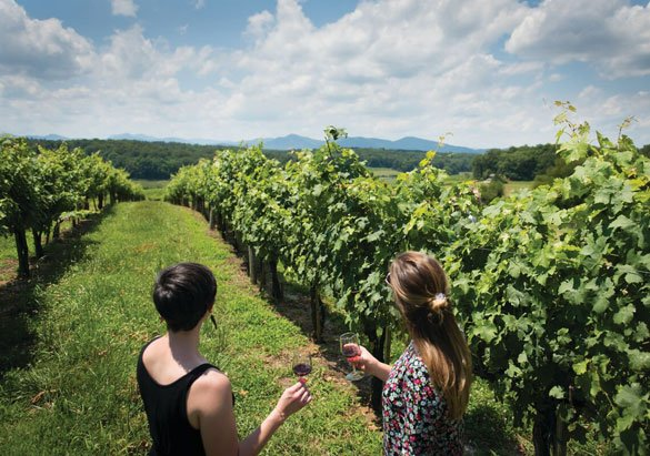 Guests enjoying a visit to Biltmore's vineyards on the west side of the estate