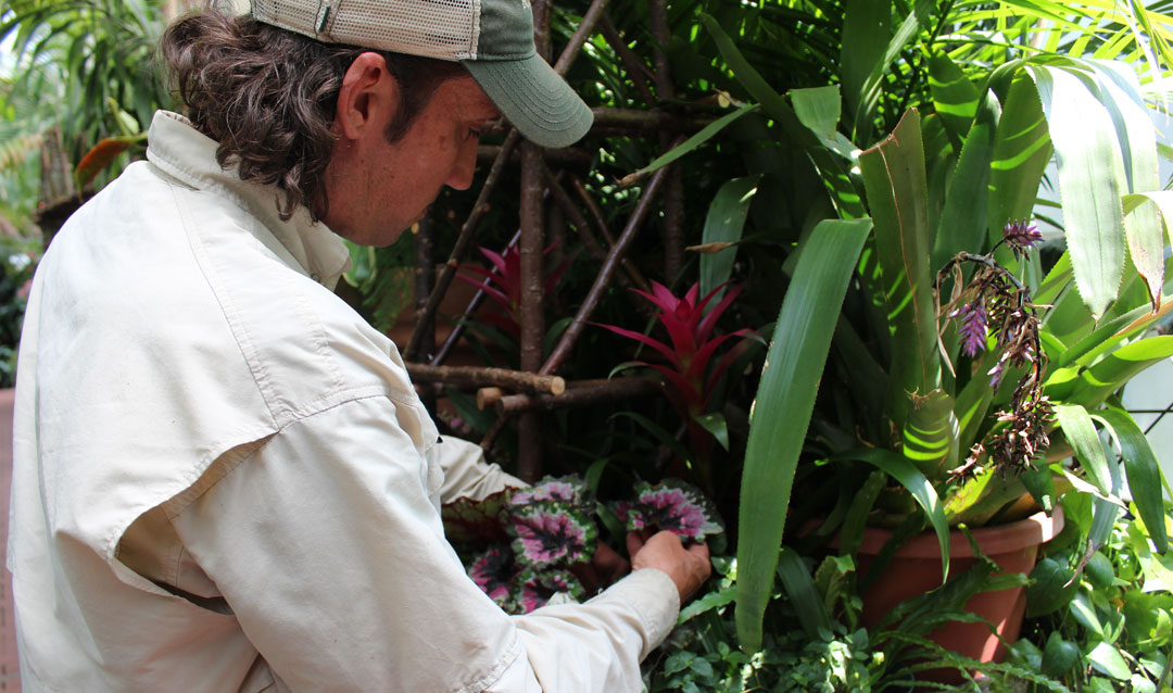 Painting with plants and colorful foliage in the Conservatory