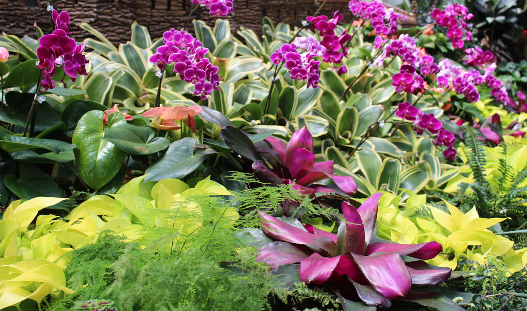 Painting with plants such as bromeliads and orchids in Biltmore's Conservatory