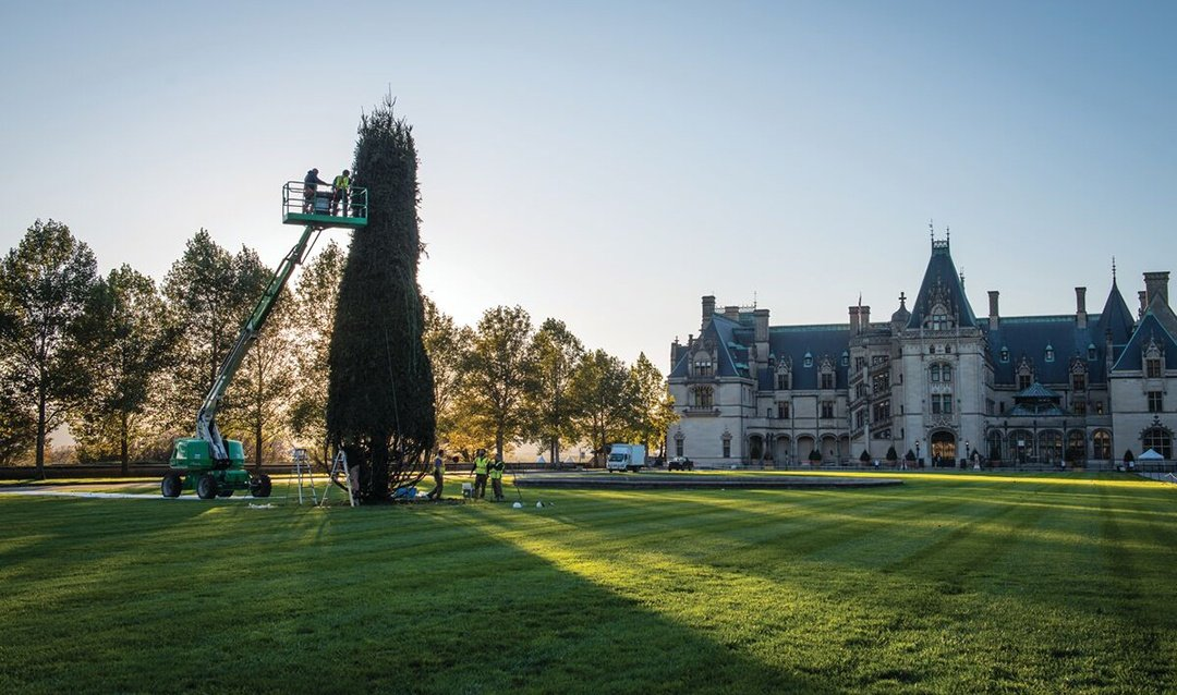 Crane assists with giant tree installation