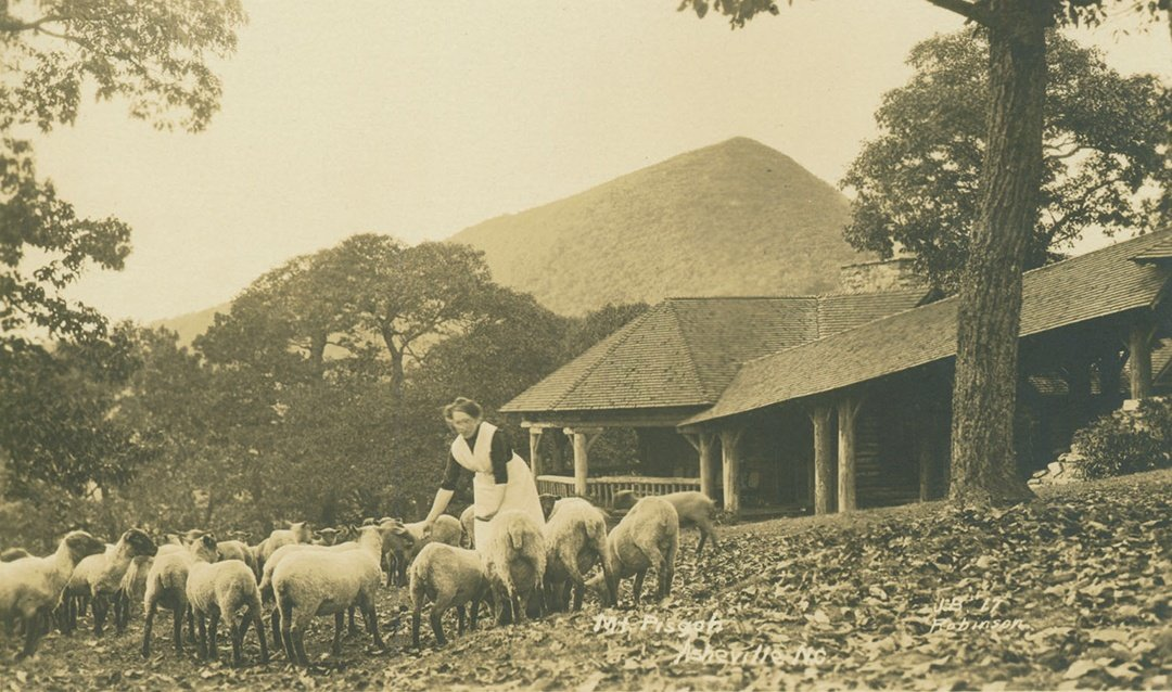 A flock of sheep being tended near Buckspring Lodge with Mount Pisgah in the background.