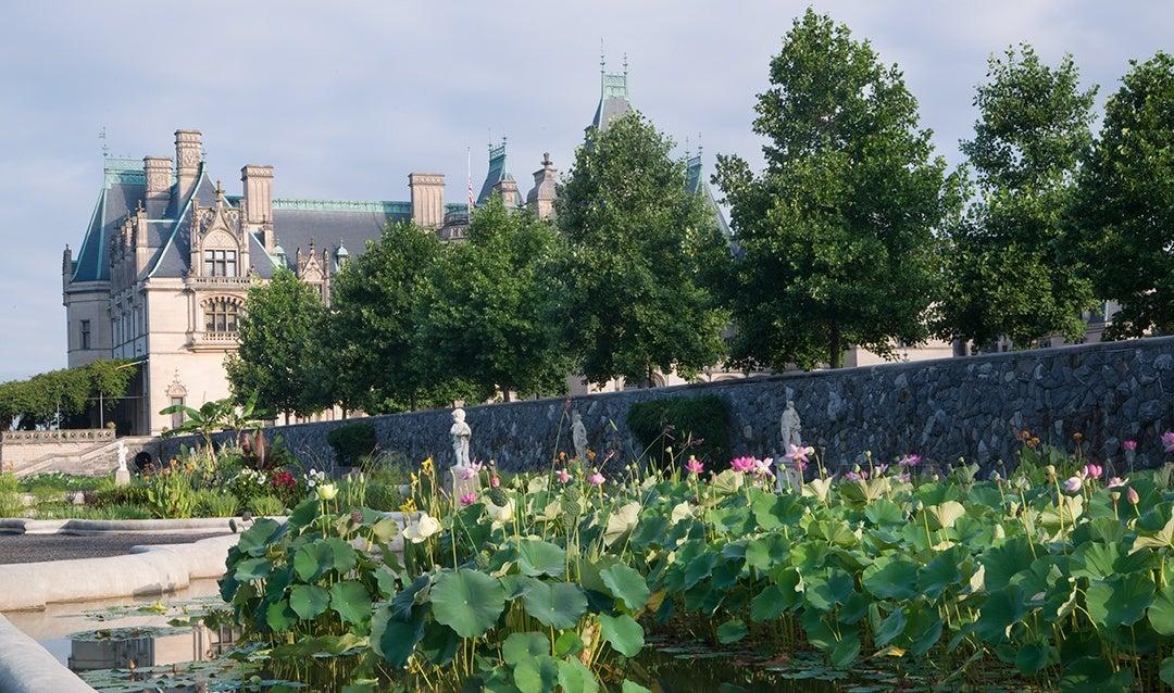 Summertime blooms in Biltmore's Italian Garden