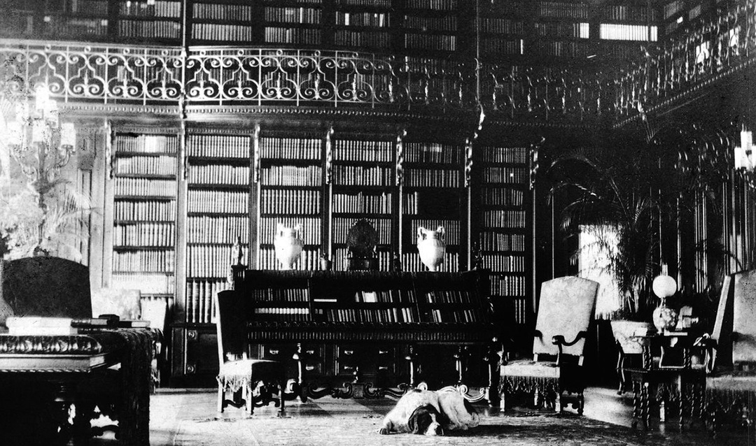 Cedric, George Vanderbilt's beloved Saint Bernard, lounging in the Library, 1898